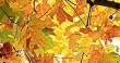 Jesień pełna energii - monojonowa teoria zdrowia i urody według Invex Remedies