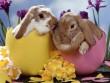 Promocja Wielkanocna
